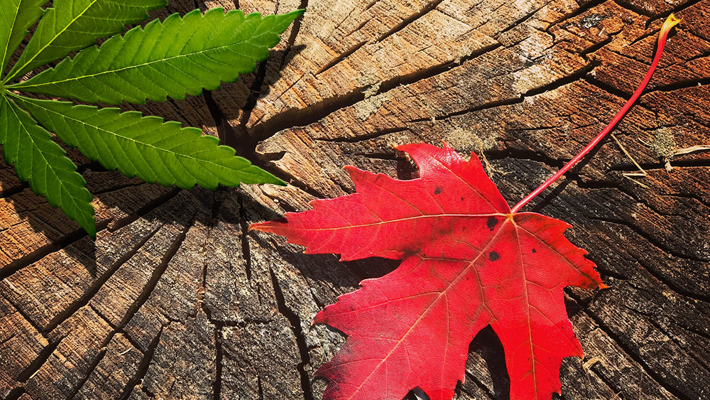 Legalization of Cannabis in Ontario and What It Means for Canadian Business